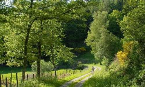 randonnée-chemin-foret_0(1)